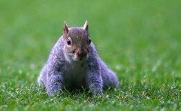 Yeşil sahaları ziyarete gelen sevimli hayvanlar! Köpek, sıçan, kanguru!