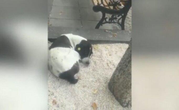 3 yıl önce kaybettiği sahibine kavuşan köpek