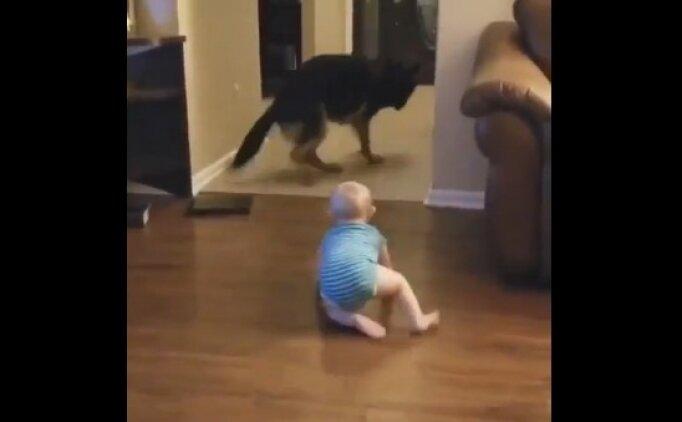 Bebek ve köpek arasında müthiş kovalamaca