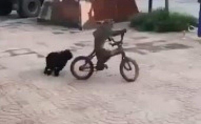Bisiklet süren maymun şaşkına çevirdi
