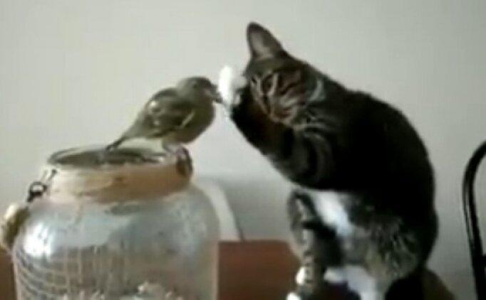 Kediyle kuşun büyük aşkı