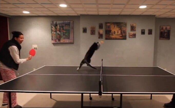 Masa tenisinde madalyaya koşan kedi