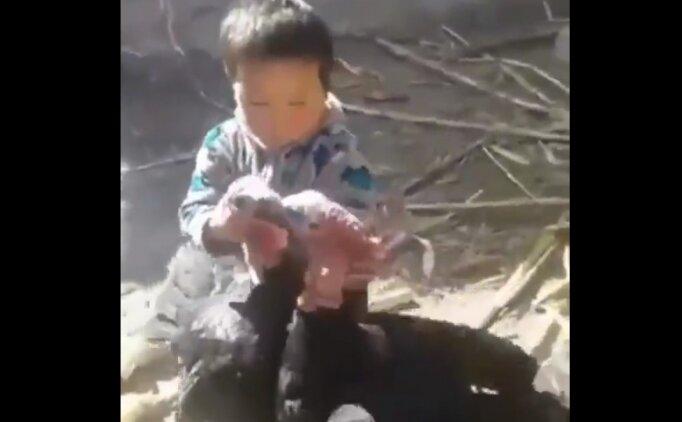 Kavga eden hindileri ayıran çocuk