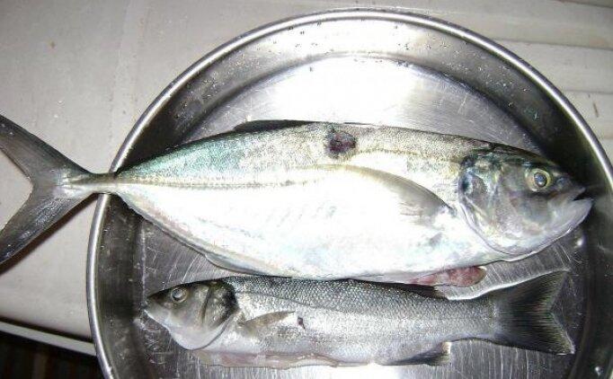 Hangi balık için istavrit azmanı ifadesi kullanılır? (Kim Milyoner Olmak İster)