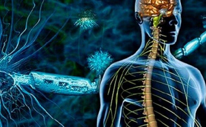 MS Hastalığı nedir? MS hastalığının tedavisi nasıldır? MS hastalığı belirtileri neler?